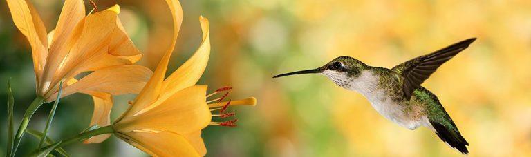 hummingbird seo update